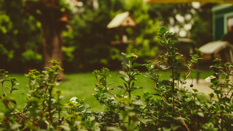 Travis Cadman – Pros and Cons of Investing Money in the Garden